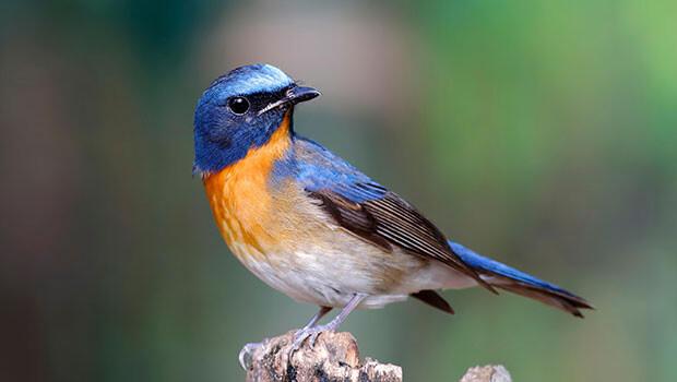 Endonezya'da 10 yeni kuş türü keşfedildi