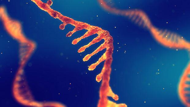 İlk kez RNA yapısı oluşturuldu
