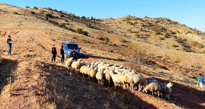Kayıp 59 koyun drone ile bulundu