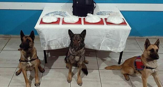 Narkotik köpekleri zehir tacirlerine geçit vermedi