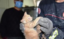 Tavan arasında mahsur kalan yavru kedi kurtarıldı