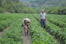 Atıl durumdaki araziyi ekilebilir hale getirdi, 2 milyon lira kazanç bekliyor