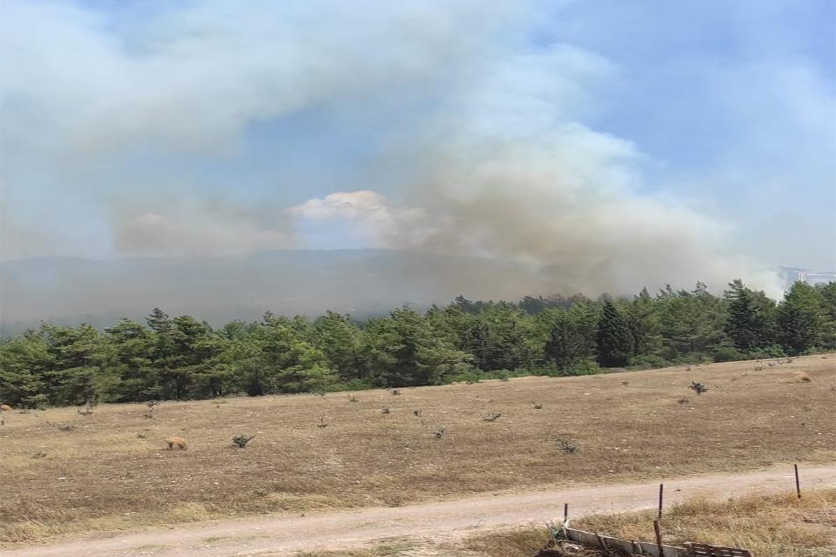 Osmaniye'de çıkan orman yangınını söndürme çalışmaları devam ediyor